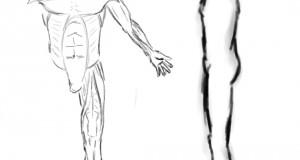 human body_male